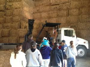 Farmer Amos talking about straw bales