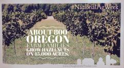 National Ag Week_Hazelnuts